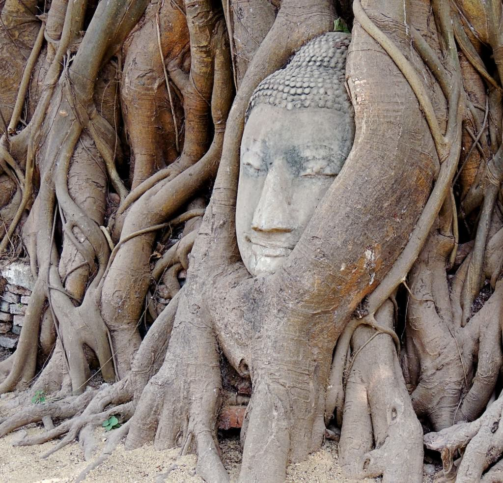 Roots swallow Buddha's head at Wat Phra Mahathat.